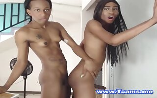 Sombre Trannies On Hot Standing Anal Fucking
